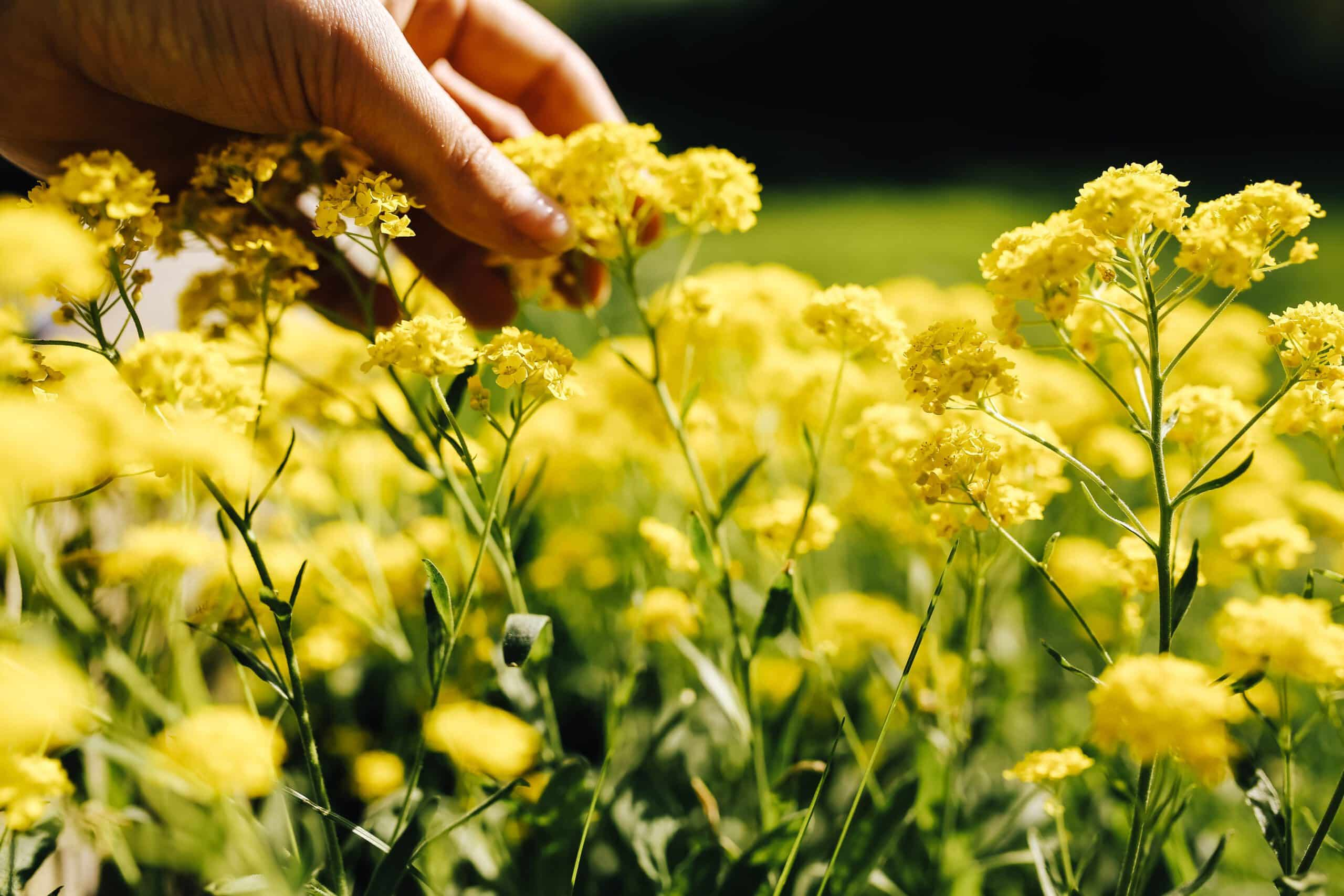 small yellow flowers self love affirmations